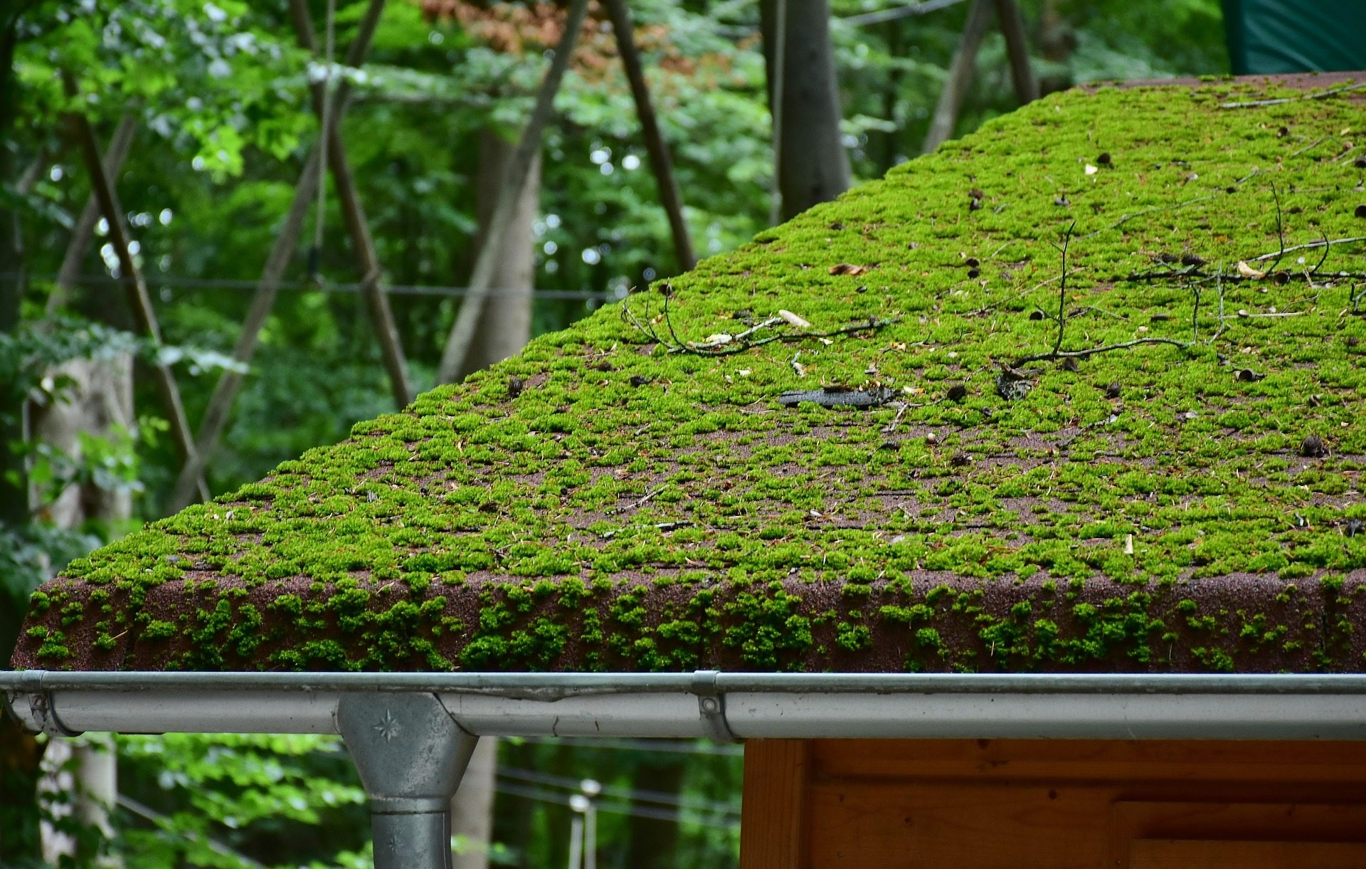 All About Moss Joyland Roofing